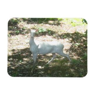 Magnet Flexible Blanc/aimant de photo cerfs communs 3x4 albinos