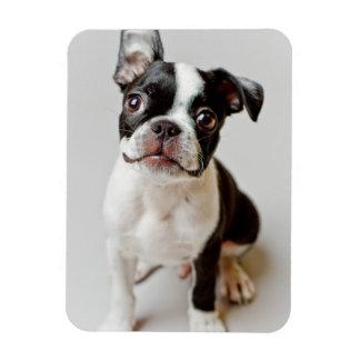 Magnet Flexible Boston Terrier