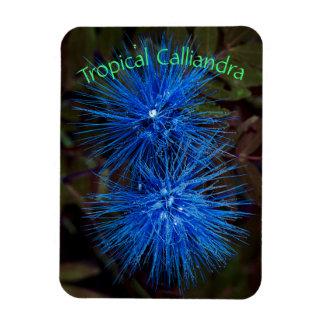 Magnet Flexible Calliandra tropical