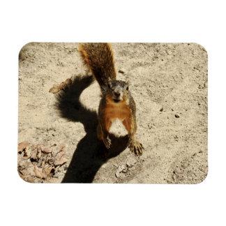 Magnet Flexible Cet écureuil fol