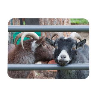 Magnet Flexible Confortablement chèvres !