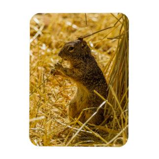 Magnet Flexible Consommation d'écureuil de roche