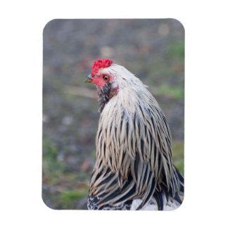 Magnet Flexible De poulet fin et personnel !