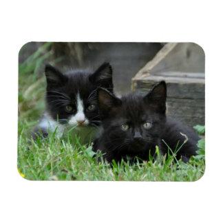 Magnet Flexible Deux chatons côte à côte