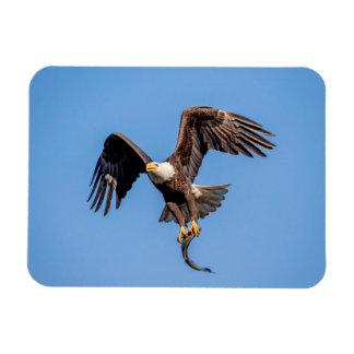 Magnet Flexible Eagle chauve avec un poisson
