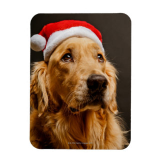 Magnet Flexible Golden retriever posant pour son Noël