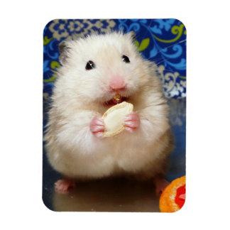 Magnet Flexible Hamster syrien pelucheux Kokolinka mangeant une gr