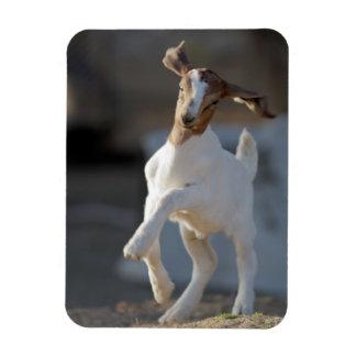 Magnet Flexible Jeu de chèvre d'enfant