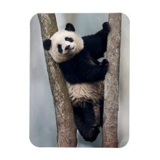 Magnet Flexible Jeune panda grimpant à un arbre, Chine