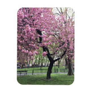 Magnet Flexible Le cerisier rose fleurit printemps New York City