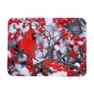 Magnet Flexible Mâle cardinal du nord, hiver, IL