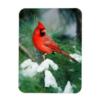 Magnet Flexible Mâle cardinal du nord sur l'arbre, IL