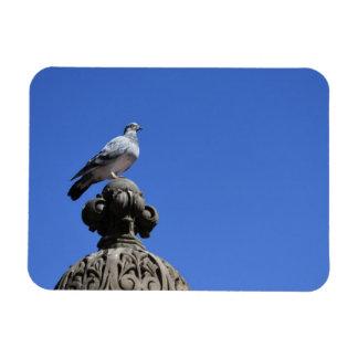 Magnet Flexible Oiseau de New York City de ciel bleu de pigeon de