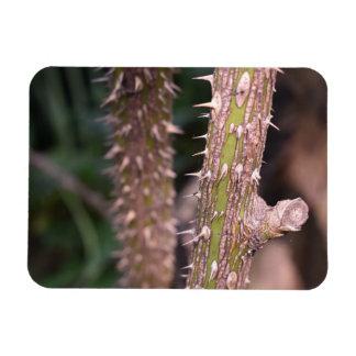 Magnet Flexible Photographie de parc naturel d'épines de tige de