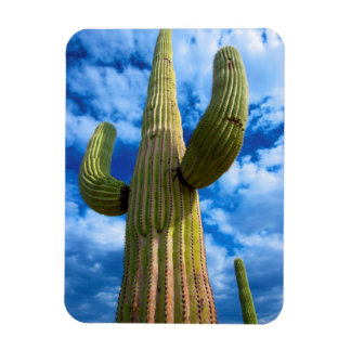 Magnet Flexible Portrait de cactus de Saguaro, Arizona