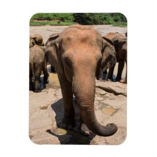 Magnet Flexible Portrait de groupe d'éléphant, Sri Lanka