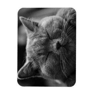Magnet Flexible Portrait noir et blanc britannique de chat de