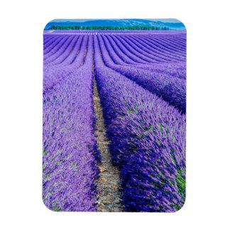 Magnet Flexible Rangées de lavande, Provence, France