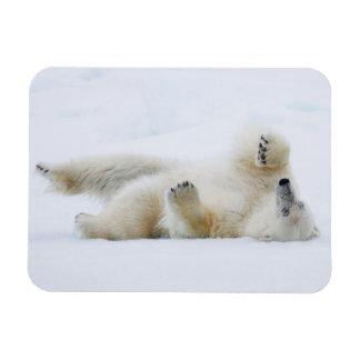 Magnet Flexible Roulement d'ours blanc dans la neige, Norvège