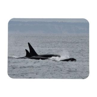Magnet Flexible Trio des baleines d'orque