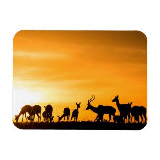 Magnet Flexible Troupeau d'impala au coucher du soleil