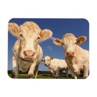 Magnet Flexible Vaches