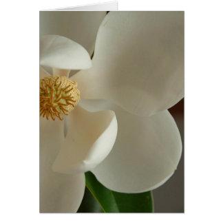 magnolia 2 carte de vœux