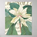Magnolia avec le détail calligraphique affiches