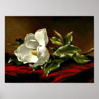 Magnolia Grandiflora-1895, _Martin Johnson Heade Posters