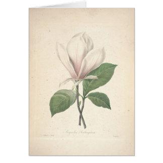Magnolia par la carte de sympathie de Redoute