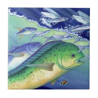Mahi Mahi (poisson de dauphin) chassant des Petit Carreau Carré