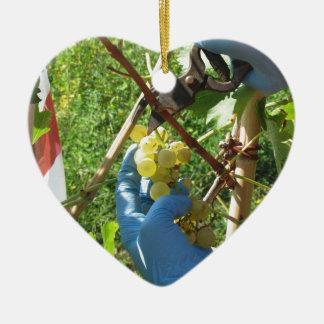 Main coupant les raisins blancs, temps de récolte ornement cœur en céramique