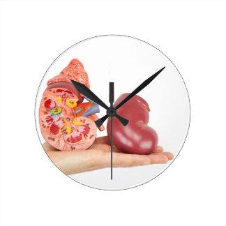 Main plate montrant le rein humain modèle horloge ronde