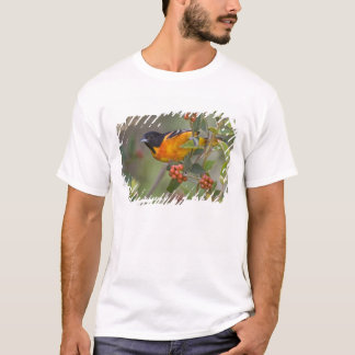 Mâle adulte de galbula d'Icterus de Baltimore T-shirt