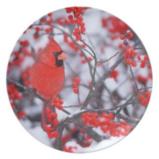 Mâle cardinal du nord, hiver, IL Assiettes En Mélamine