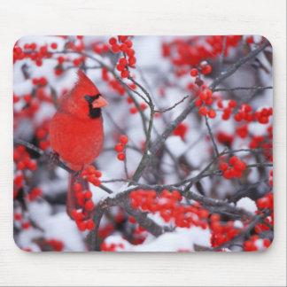 Mâle cardinal du nord, hiver, IL Tapis De Souris