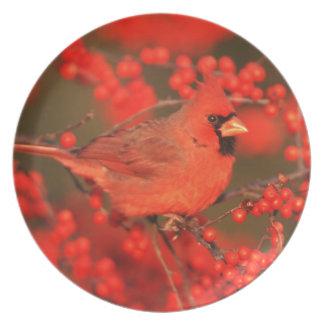 Mâle cardinal du nord rouge, IL Assiette