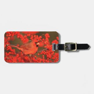Mâle cardinal du nord rouge, IL Étiquettes Bagages