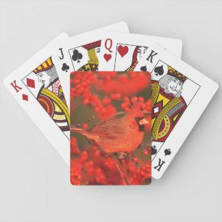 Mâle cardinal du nord rouge, IL Jeu De Cartes