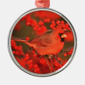 Mâle cardinal du nord rouge, IL Ornement Rond Argenté