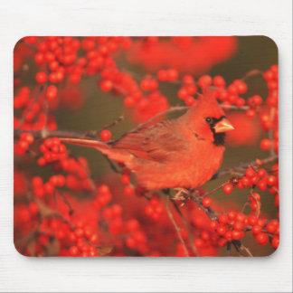 Mâle cardinal du nord rouge, IL Tapis De Souris