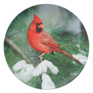 Mâle cardinal du nord sur l'arbre, IL Assiettes En Mélamine