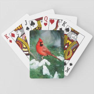 Mâle cardinal du nord sur l'arbre, IL Jeu De Cartes