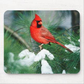 Mâle cardinal du nord sur l'arbre, IL Tapis De Souris