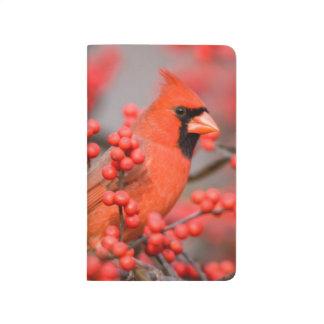 Mâle cardinal du nord sur le Winterberry commun Carnet De Poche