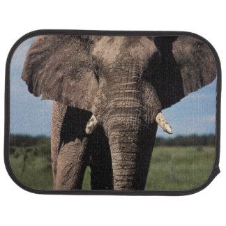 Mâle de jeunes d'éléphant tapis de sol