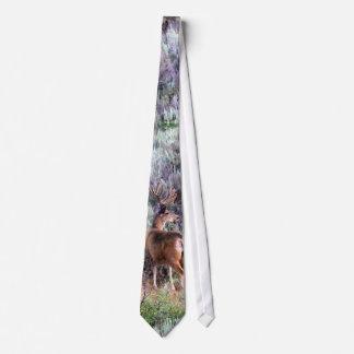 Mâle de velours cravates