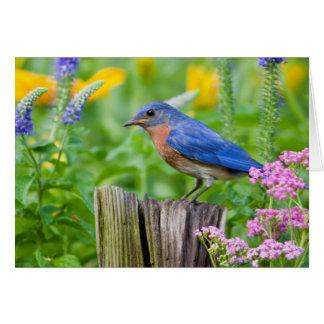 Mâle d'oiseau bleu sur le courrier de barrière carte de vœux