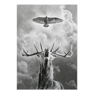 Mâle et Eagle Impression Photo