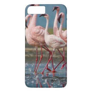 Mâle peu de flamants (mineur de Phoenicopterus) Coque iPhone 7 Plus